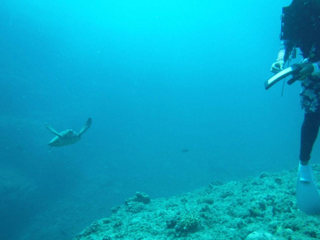 宮古島ダイビングのカメ